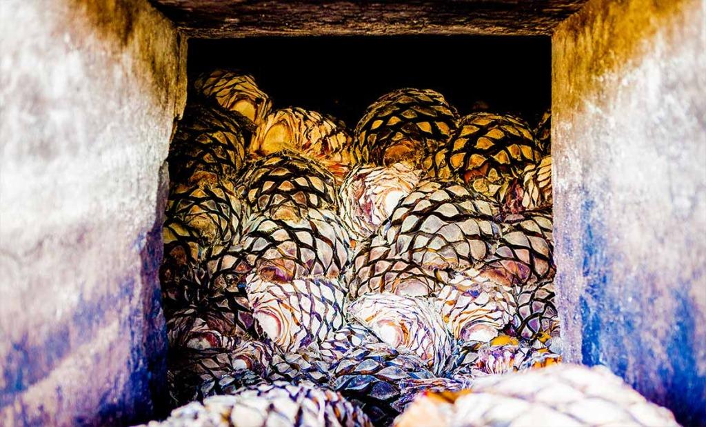 La piña del agave entrando a los hornos para ser procesada en tequila.